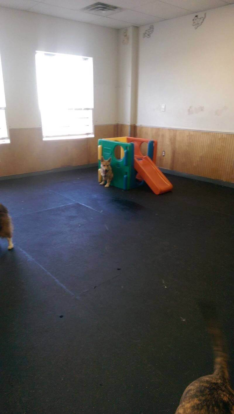 Fast Growing Doggie Daycare
