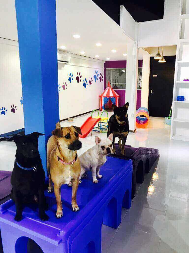 Successful Doggie Daycare, Boarding And Grooming Service For Sale